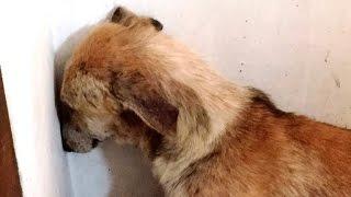 מרגש: צפו בשינוי הגדול שעברה הכלבה לאחר שחוותה התעללות >>