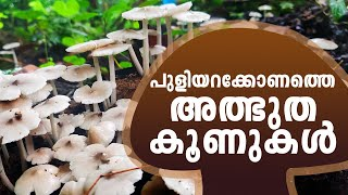 Mushrooms and the Biological Clock