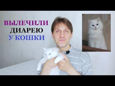 КАК ВЫЛЕЧИТЬ ПОНОС У КОШКИ (наш опыт) / Чем кормить котенка при поносе / Диарея у кота