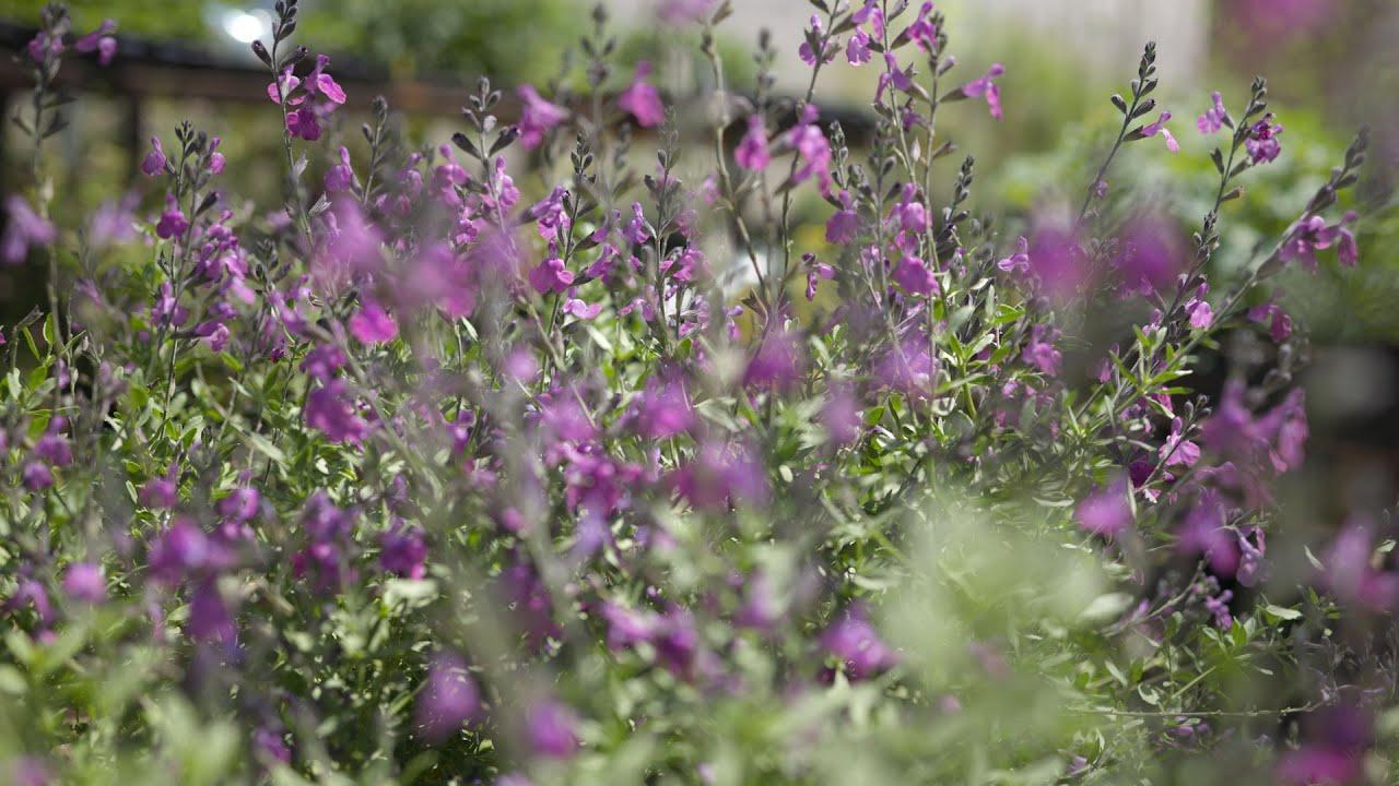 Restoring the Native Flora