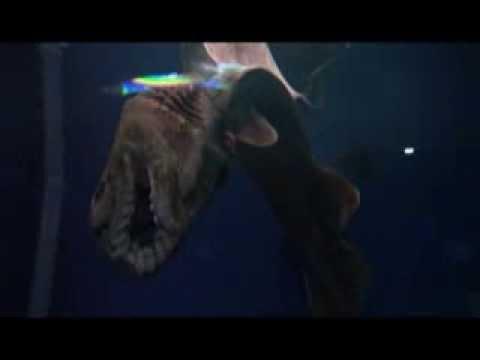 【静岡】あれ?死んでる!?放送事故寸前の深海生物。
