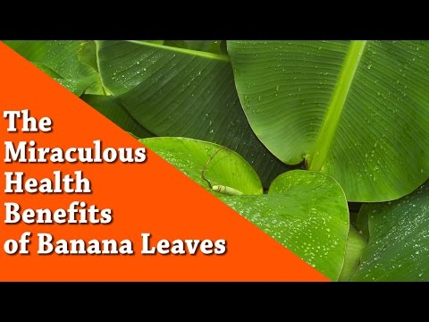 Video The Miraculous health benefits of Banana leaves