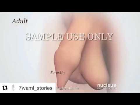 Die Vitamine für die Erhöhung sexuell das Mitglied