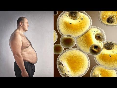 El programa para quemar la grasa en el vientre