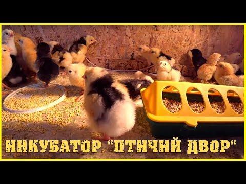 Третья инкубация куриного яйца / Инкубатор птичий двор / Семья в деревне