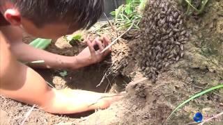 Natural Honey Bee live underground