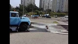 Киев, жара.... Добрый водитель попался, повезло псу!