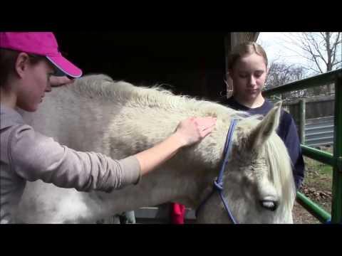 Equine Massage - Horse #2 (Part 3)