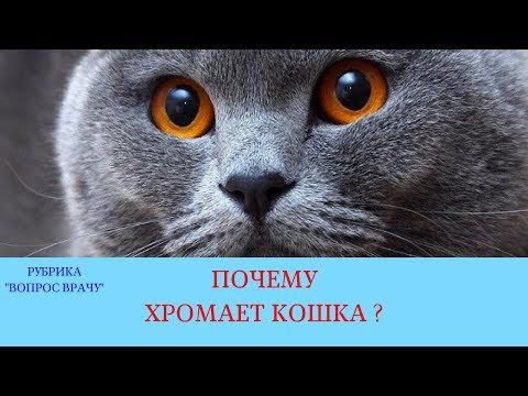 Почему хромает кошка?