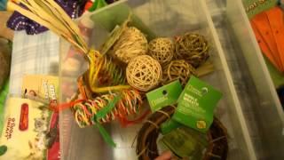 All My Guinea Pig Toys & Treats