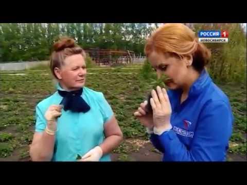 Пряно-вкусовые растения. Шубина Людмила Николаевна. Сад Шубиной.