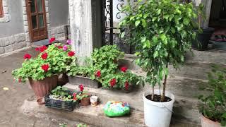 193. Подготовка цветов к зиме.  Переезжают в дом.