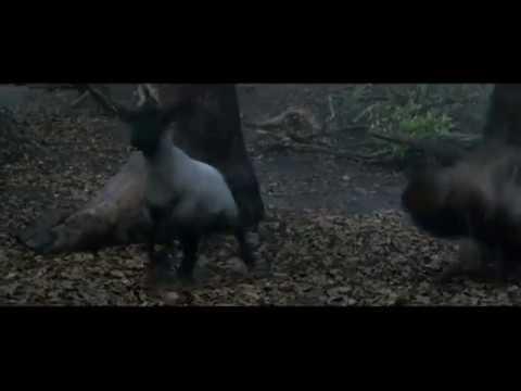Трейлер фильма «Джек - покоритель великанов»