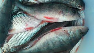 Отчеты о зимне рыбалке в подмосковье