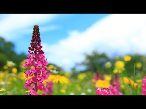 Beautiful Piano Music - Relaxing Music, Study Music, Stress Relief, Sleep Music (Jordan)
