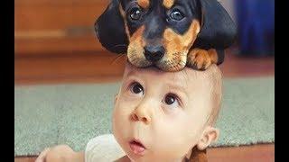 「絶対笑う」最高におもしろ犬,赤ちゃん,動物のハプニング,失敗画像集2018#2