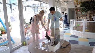 World's First Otter And Chinchilla Cafe