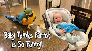 Baby Thinks Parrot is Funny!