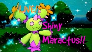 Maractus  - (Pokémon) - [EPIC LIVE!!] Shiny Maractus after 5 months in Friend Safari in Pokémon X!!