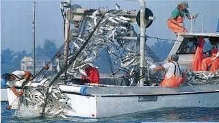 The Best Net Fishing - Fishermen Catch A Lot Of Fish With Net Fishing