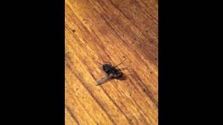 Cluster Fly = Cheap Entertainment - November 2012
