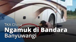 VIDEO Detik-detik TKA China Ngambek Sembunyi di Kolong Bus di Bandara Banyuwangi, Tolak Dipulangkan