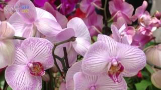Las Flores de Madeira 2015