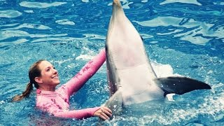 The Dream of Being a Dolphin Trainer - Motivational Video
