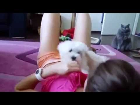 Flippantly Naughty Dog With Sexy Girl Compilation So Funny :):)