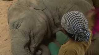 Lullaby to elephant - ElephantNews