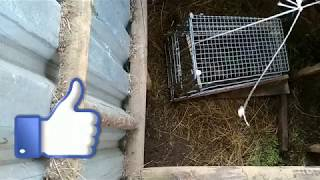 Как сделать ловушку для ловли кроликов