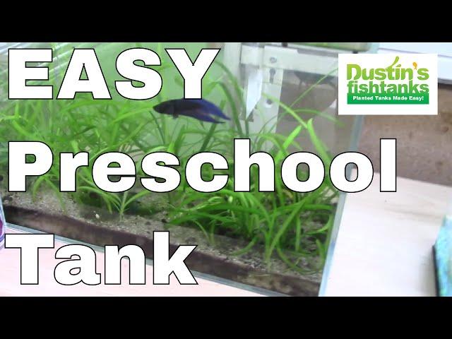 How to Keep Betta Fish: BettaTank at Preschool; Plants to fish Ratio