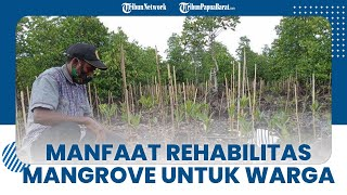 Warga Sorong Dapat Upah dari Menanam Mangrove, Kepala Kampung Maibo: Sangat Bermanfaat