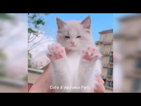 Top 15 Funny And Cute Cat Compilation of This Week- Cute And Adorable Pets