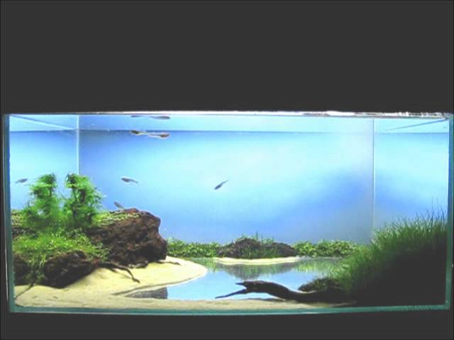 Tha / 15 l. Aquascape