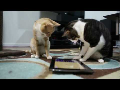 Video of Cat Playground - Game for cats