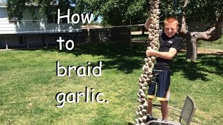 How To Braid Garlic In 4 Easy Steps