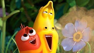 LARVA - BEAUTIFUL FLOWERS | Cartoon Movie | Cartoons For Children | Larva Cartoon | LARVA Official