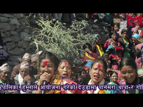 pansara Thapa & govindra's new deuda in adanchuli, humla, nepal पानसरा थापा काे नयाँ देउडा 2019