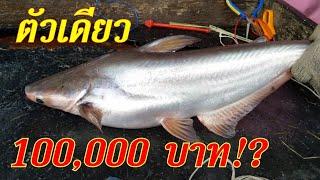 #ปลาตัวเดียวราคา 100,000 บาท หากันทั้งวันกว่าจะเจอตัว!?1.80 โล