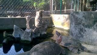Turtles are petrified