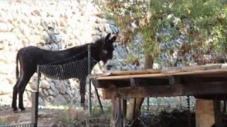 preview picture of video 'La Granja de Esporlas'