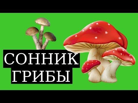 СОННИК - К чему снятся грибы? (2019) Толкование Снов