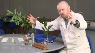 Transpiration – the power of the potometer