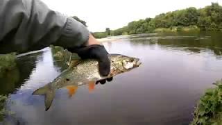 Рыбалка на реке быстрая сосна липецкой области