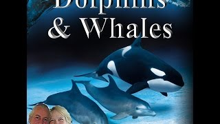 Dolphins & Whales in the Akashic Records
