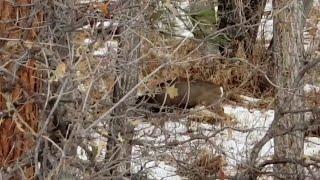 animales batalla entre venados