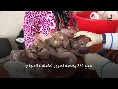 العرب اليوم - شاهد: إجراءات مكثّفة لضمان السلامة الصحية خلال عيد الأضحى