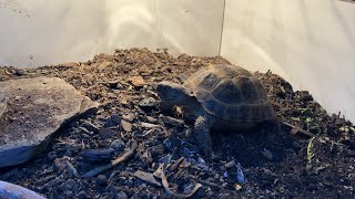 Three Month Update On My Russian Tortoise! | DIY Reptiles