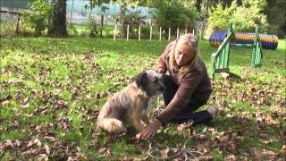 Bundle. 1. Taming a feral dog.  day 1 The arrival.wmv